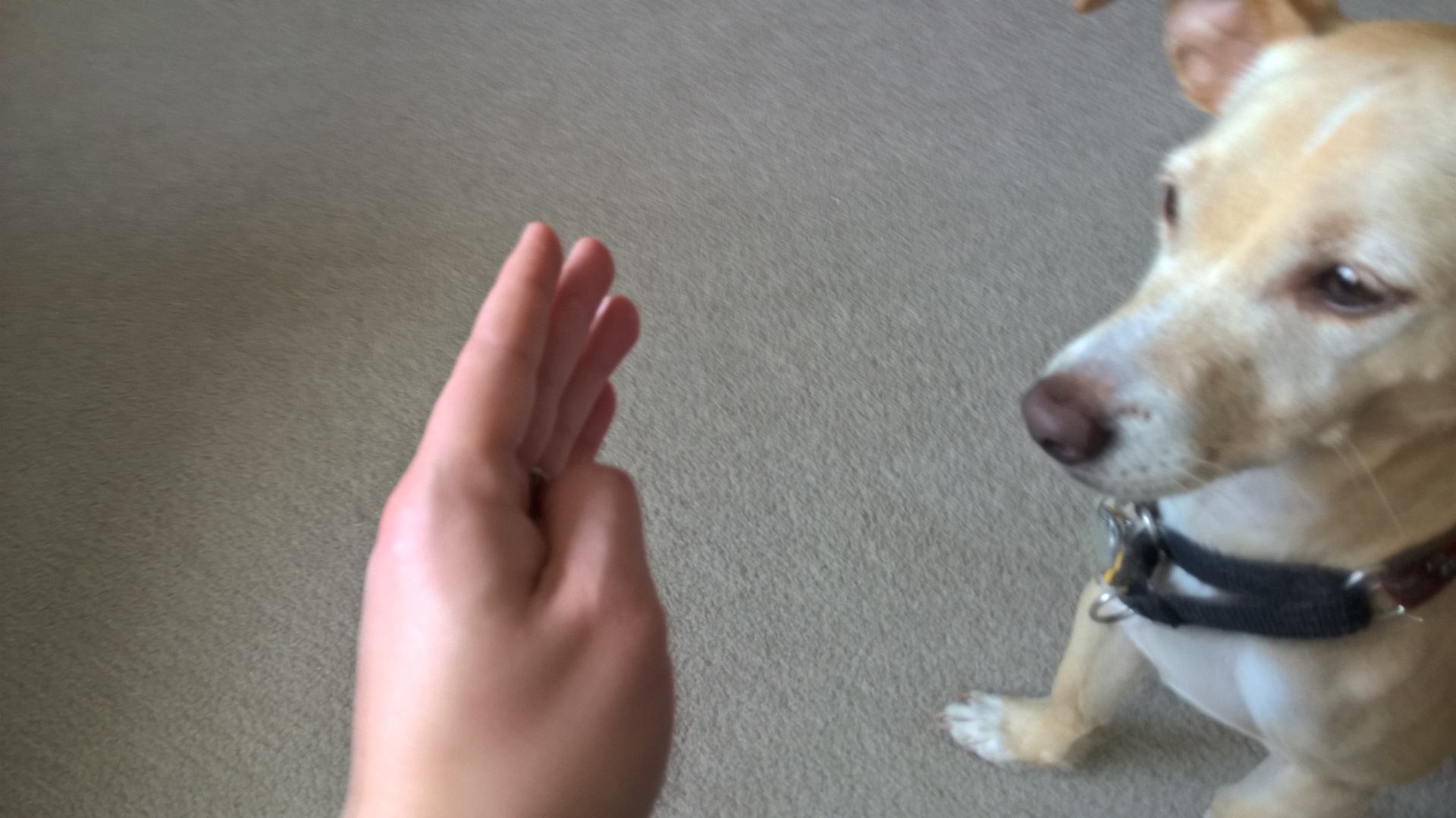 Having the dog make contact with your hand